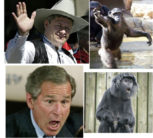 harper-bush-monkey.png